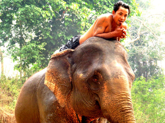andar-elefante-laos-2