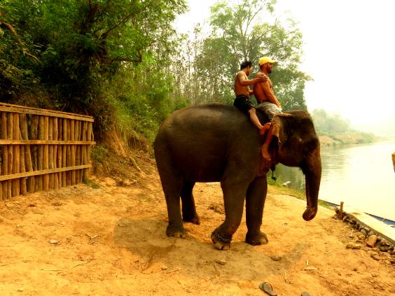 andar-elefante-laos-3