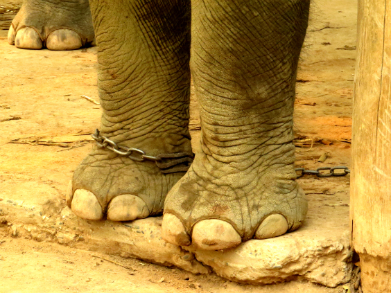 andar-elefante-laos-9